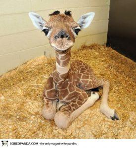 cute-baby-animals-2