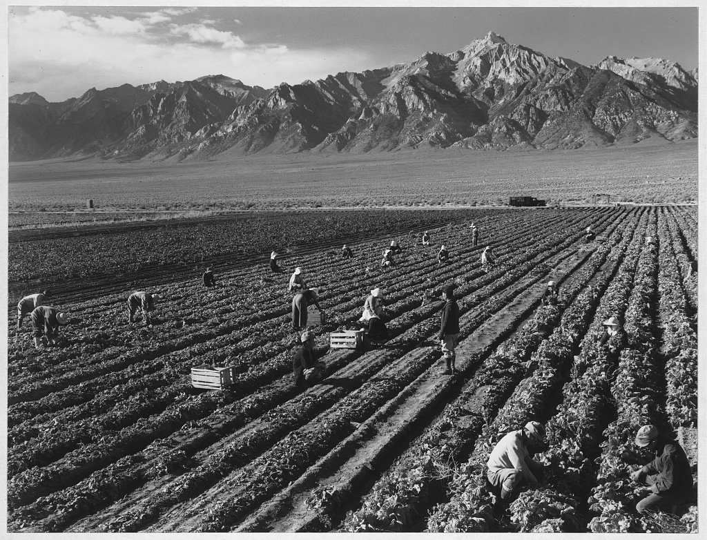 images-of-the-fields-at-manzanar-are-beautiful