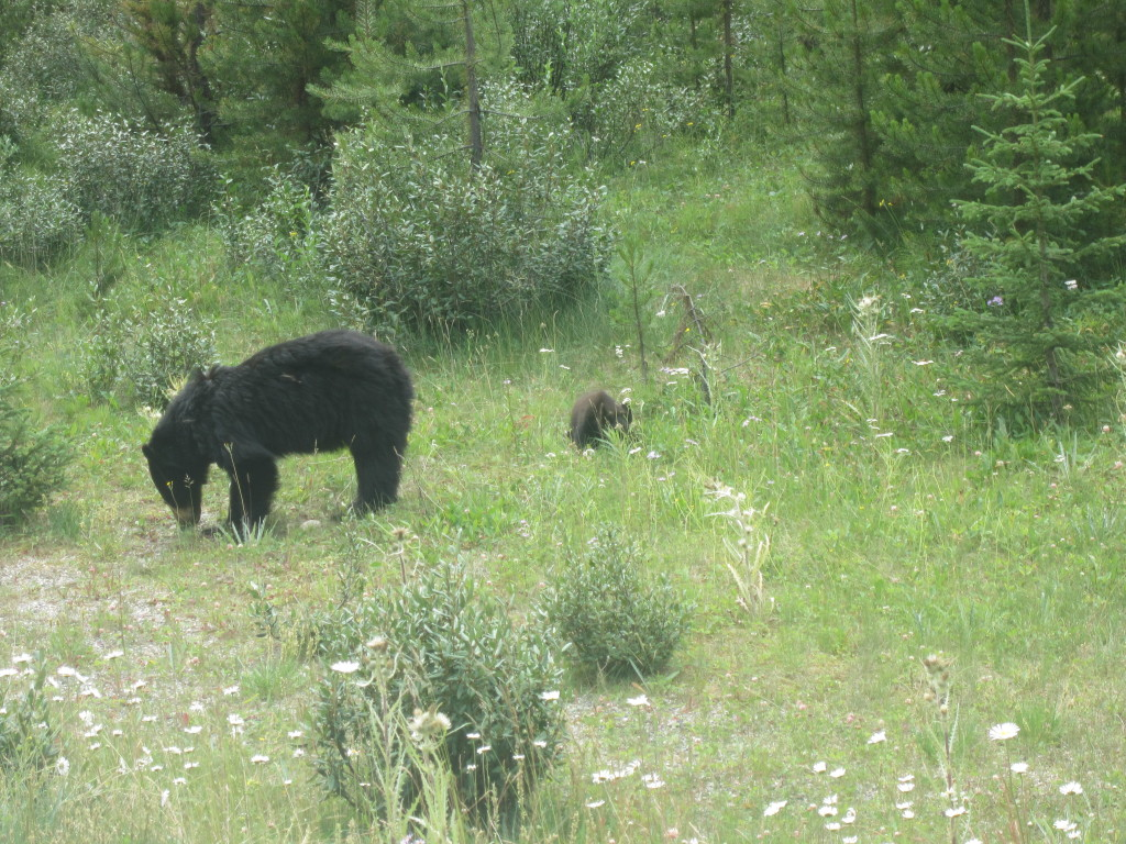 We saw six bears, here is one of them.