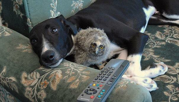Torque the Dog and Shrek the Owl