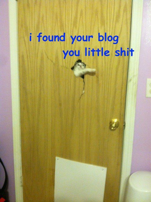 blogs broken door cat