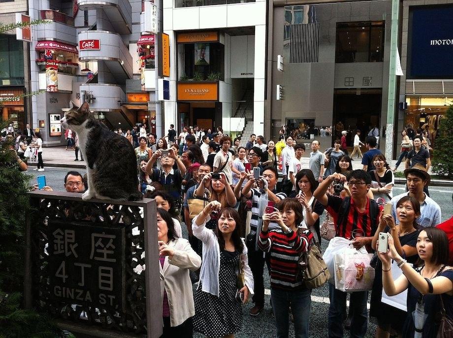 cat japanese tourists photos