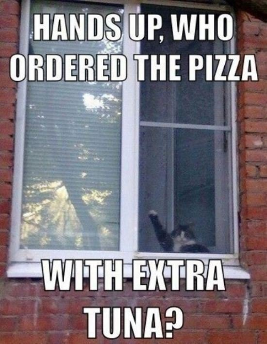 cat pizza tuna funny