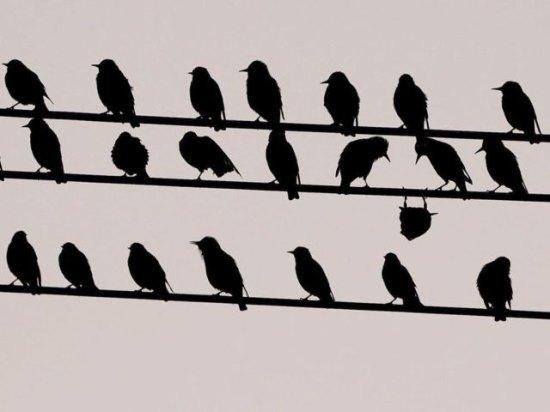 tbb bird birds cool