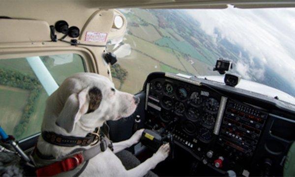 dog_plane